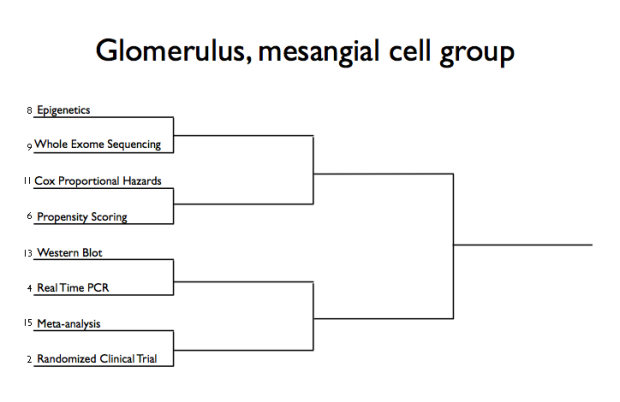Glomerulus Mesangial Cell Group