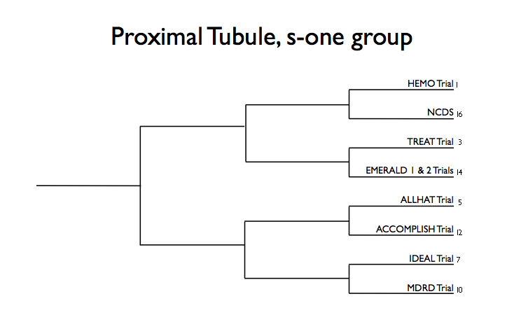 Proximal tubule s1 group