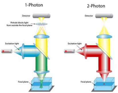 Image via Light Microscopy Core Facility / Duke University and Duke University Medical Center