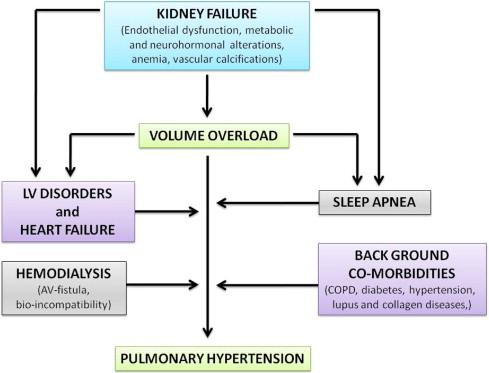 Pulmonary Hypertension In Ckd Ajkd Blog
